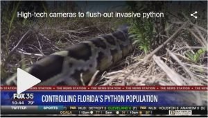 Camera to flush out invasive python
